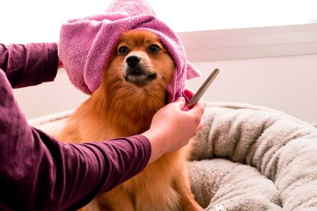 Petsmart Dog Groomer